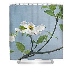 Dogwood Blossoms Shower Curtain by Kim Hojnacki