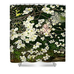Shower Curtain featuring the painting Dogwoods Virginia by Melly Terpening