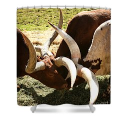 Doing The Watusi Shower Curtain