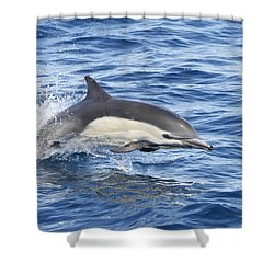 Shower Curtain featuring the pyrography Dolphin At Play by Shoal Hollingsworth