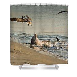 Dolphin Joy Shower Curtain