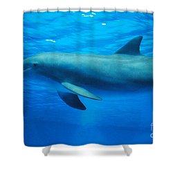 Dolphin Underwater Shower Curtain by DejaVu Designs