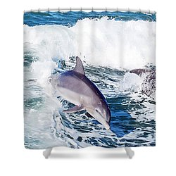 Dolphins Jumping Shower Curtain by Aimee L Maher Photography and Art Visit ALMGallerydotcom