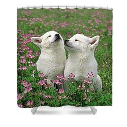 Domestic Dog Canis Familiaris Puppies Shower Curtain by Yuzo Nakagawa