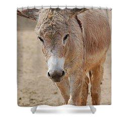 Donkey Shower Curtain by DejaVu Designs