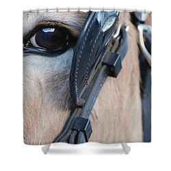 Donkey Eye Shower Curtain