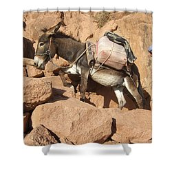Donkey Of Mt. Sinai Shower Curtain
