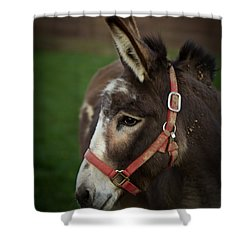 Donkey Shower Curtain by Shane Holsclaw