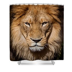 Don't Ask Shower Curtain by Steven Reed
