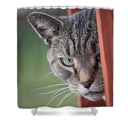 Don't Mess With Gilbert Shower Curtain by Jennifer E Doll