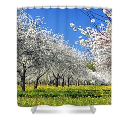 Door County Cherry Blossoms Shower Curtain