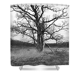 Dormant Beauty Bw Shower Curtain