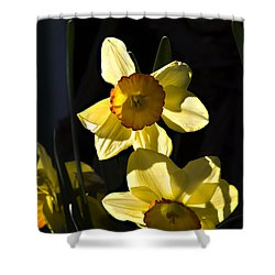 Shower Curtain featuring the photograph Dos Daffs by Joe Schofield