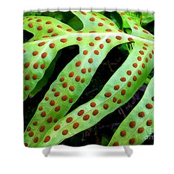 Shower Curtain featuring the photograph Dots by Kristine Merc