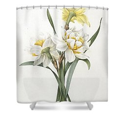 Double Daffodil Shower Curtain by Pierre Joseph Redoute