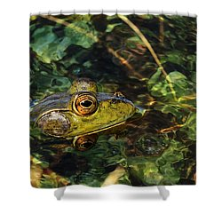 Double Dare Ya Shower Curtain by Donna Kennedy