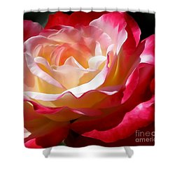Double Delight Rose Shower Curtain by Kaye Menner