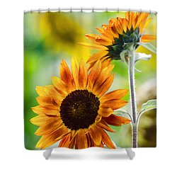 Double Dose Of Sunshine Shower Curtain by Jordan Blackstone