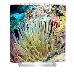 Double Giant Anemone And Arrow Crab Shower Curtain by Amy McDaniel