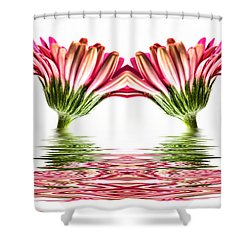 Double Pink Gerbera Flood Shower Curtain by Steve Purnell
