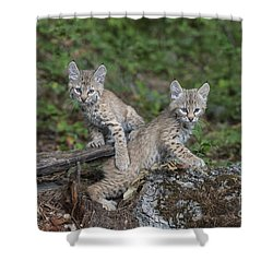Double Trouble Shower Curtain by Sandra Bronstein