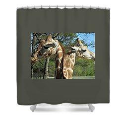 Giraffes With A Twist Shower Curtain