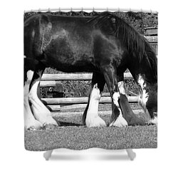 Shower Curtain featuring the photograph Double Vision by Ann E Robson