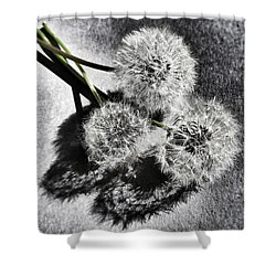 Doubled Wishes Shower Curtain by Marianna Mills