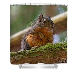 Douglas Squirrel Shower Curtain by Paul Rebmann