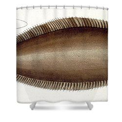 Dover Sole Shower Curtain by Andreas Ludwig Kruger