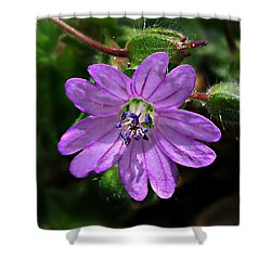 Shower Curtain featuring the photograph Wild Dovesfoot Cranesbill by William Tanneberger