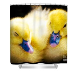 Downy Ducklings Shower Curtain by Edward Fielding