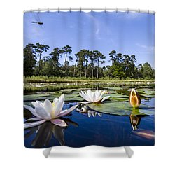 Downy Emerald Dragonfly Flying Over Lake Shower Curtain