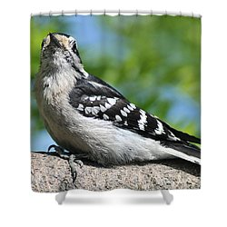 Downy Woodpecker 302 Shower Curtain
