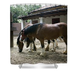 Shower Curtain featuring the photograph Draft Horses by Lynn Palmer