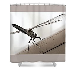 Shower Curtain featuring the photograph Dragon Of The Air  by Micki Findlay