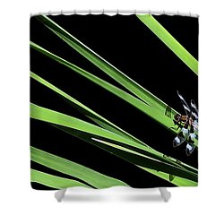 Dragon Resting On Blades Shower Curtain