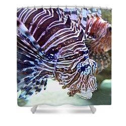 Dragonfish In Tandem Shower Curtain by Sandi OReilly