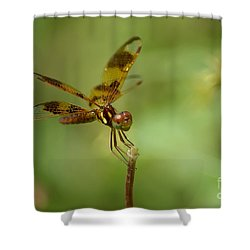 Shower Curtain featuring the photograph Dragonfly 2 by Olga Hamilton