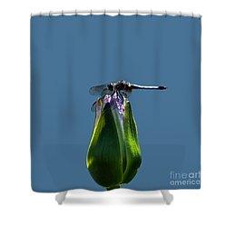 Dragonfly Appreciates A Flower Shower Curtain by Byron Varvarigos