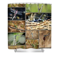 Dragonfly Collage Shower Curtain by Carol Groenen