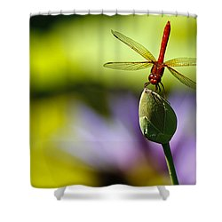 Dragonfly Display Shower Curtain