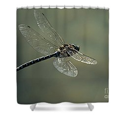 Dragonfly In Flight Shower Curtain by Bob Christopher