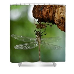 Dragonfly Shower Curtain by Jane Ford