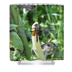 Shower Curtain featuring the photograph Dragonfly by Karen Silvestri