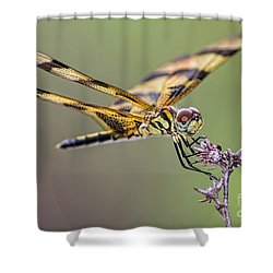 Shower Curtain featuring the photograph The Halloween Pennant Dragonfly by Olga Hamilton