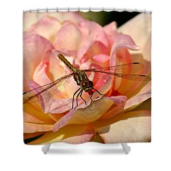 Dragonfly On A Rose Shower Curtain