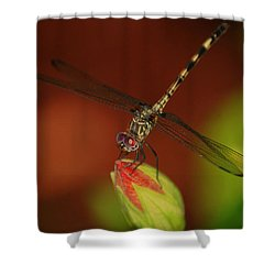 Shower Curtain featuring the photograph Dragonfly On Hibiscus by Leticia Latocki