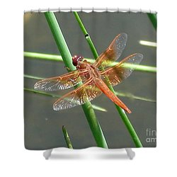 Shower Curtain featuring the photograph Dragonfly Orange by Kerri Mortenson