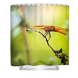 Dragonfly Smile Shower Curtain by Priya Ghose